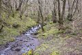 Heavy with rain the ground in wales is so sodden that little creeks are flowing stongly down small slopes making pretty little Royalty Free Stock Photo