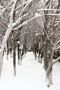 The heavy snow in the woods Stock Photos