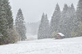Heavy snowstorm over alpine meadows in forest Royalty Free Stock Photo