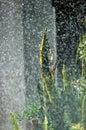Heavy summer rain Royalty Free Stock Photography