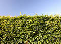 The Hedge Royalty Free Stock Photos