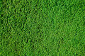 Hedge background Royalty Free Stock Images