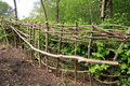 Hedge coppice Royalty Free Stock Images