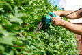 Hedge Royalty Free Stock Photo