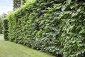 Hedge green and tall formal garden Stock Image