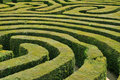 Hedge maze Stock Photography