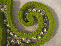 Hedge spiral shaped Royalty Free Stock Image