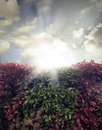 Hedge sun rays in sky Stock Images