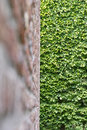 Hedge Wall Stock Image