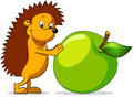 Hedgehog cheerful rolls green apple Stock Photo