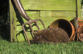 Hedgehog erinaceus europaeus single mammal by flowerpot uk Royalty Free Stock Photography