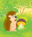 Hedgehog funny with a big mushroom in a forest glade Royalty Free Stock Photography