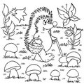 Hedgehog gathers mushrooms Stock Photo