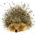 Hedgehog Illustration With Spl...