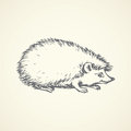 Hedgehog. Vector drawing