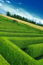 Hedgerow