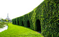 Hedgerow arches arch shapes cut into a tall Royalty Free Stock Images