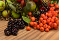 Hedgerow Fruits Stock Photography
