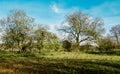 Hedgerow Trees In Autumn Sun