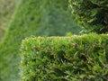 Hedges Stock Photo
