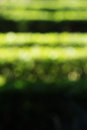 Hedges in a garden blurred background composition useful as with some green of bright sunny day space for text at the bottom Royalty Free Stock Image