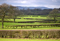 Hedges network of separate grazing land with south downs in background Royalty Free Stock Image
