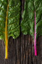 Heirloom swiss chard yellow and purple stock Royalty Free Stock Image