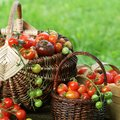 Heirloom variety tomatoes in baskets Colorful tomato - red,yellow , orange. Harvest vegetable cooking conception Royalty Free Stock Photo