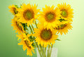 Helianthus or sunflowers, floral arrangement, bouquet, green light background, close up. Family Asteraceae Royalty Free Stock Photo