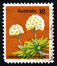 Helichrysum Thomsonii Australian Postage Stamp