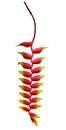 Heliconia flower isolated
