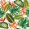 Heliconia and strelizia flowers vector illustration. Tropical orange plants background.