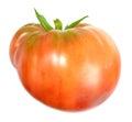 Helium tomato on vine isolated on white background Stock Images