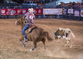 Helldorado days rodeo las vegas may cowboy participant in a calf roping competition at the professional in las vegas usa on may Stock Images
