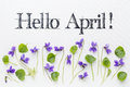 Hello april greetings with viola flowers fresh and leaves on white art canvas Stock Images