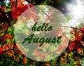 Hello August greeting on blooming flame tree and sunset sun background.Summer concept. Royalty Free Stock Photo