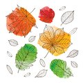 Hello autumn! Fall of the leaves. Autumn leaves of trees on an orange, red, green and yellow watercolor background.