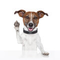 Hello goodbye high five dog Royalty Free Stock Photo