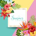 Hello Summer Tropic Design. Tropical Hibiskus Flowers Background for Poster, Sale Banner, Placard, Flyer. Floral Vintage Royalty Free Stock Photo