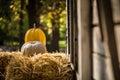 Helloween pumpkin Royalty Free Stock Photo