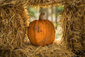 Helloween pumpkin Royalty Free Stock Photo