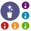 Hemp in pot icons set