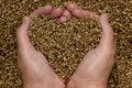 Hemp Seeds Stock Photos