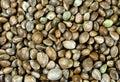 Hemp seeds on background Royalty Free Stock Photo