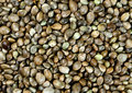 Hemp seeds on the background Royalty Free Stock Photo