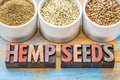 Hemp seeds hearts and protein powder products shelled in small ceramic bowls on a grunge wood with atext in vintage Royalty Free Stock Photography