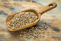Hemp seeds a rustic scoop of against a grunge painted wood background Royalty Free Stock Image
