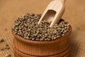 Hemp seeds Royalty Free Stock Photo