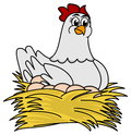Hen brooding eggs a white illustration Stock Photo