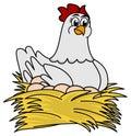 Hen brooding eggs a white illustration Stock Photo